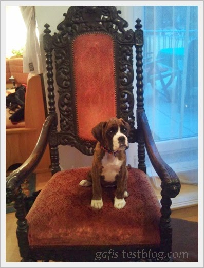 Prinzessin Boxer-Amy