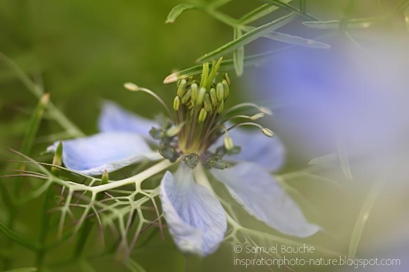 macro fleur du jardin prairie fleurie