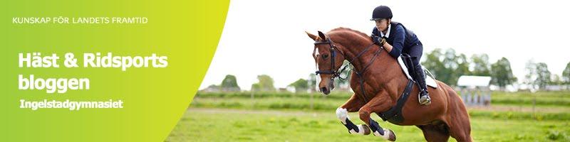 Häst och ridsportbloggen Ingelstadgymnasiet