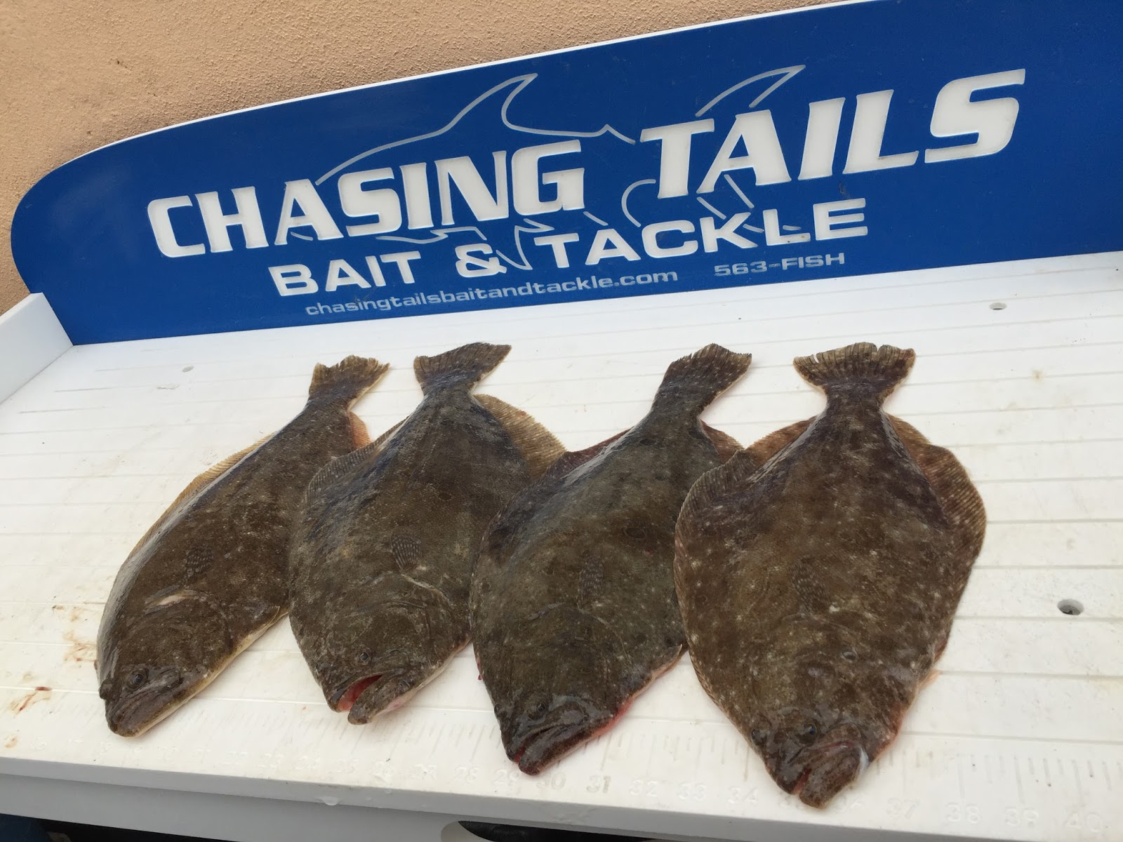 Keeper fluke on the inside chasing tails bait tackle for Chasing tails fishing report