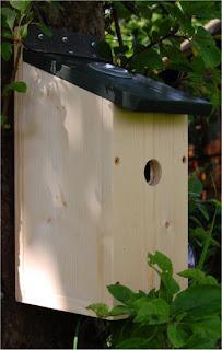 camera birdbox