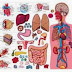 Vücudumuz İle İlgili Doğru Sanılan 12 Yanlış