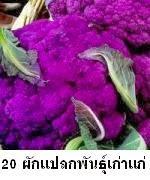 20 พืชผักแปลกสายพันธุ์เก่าแก่