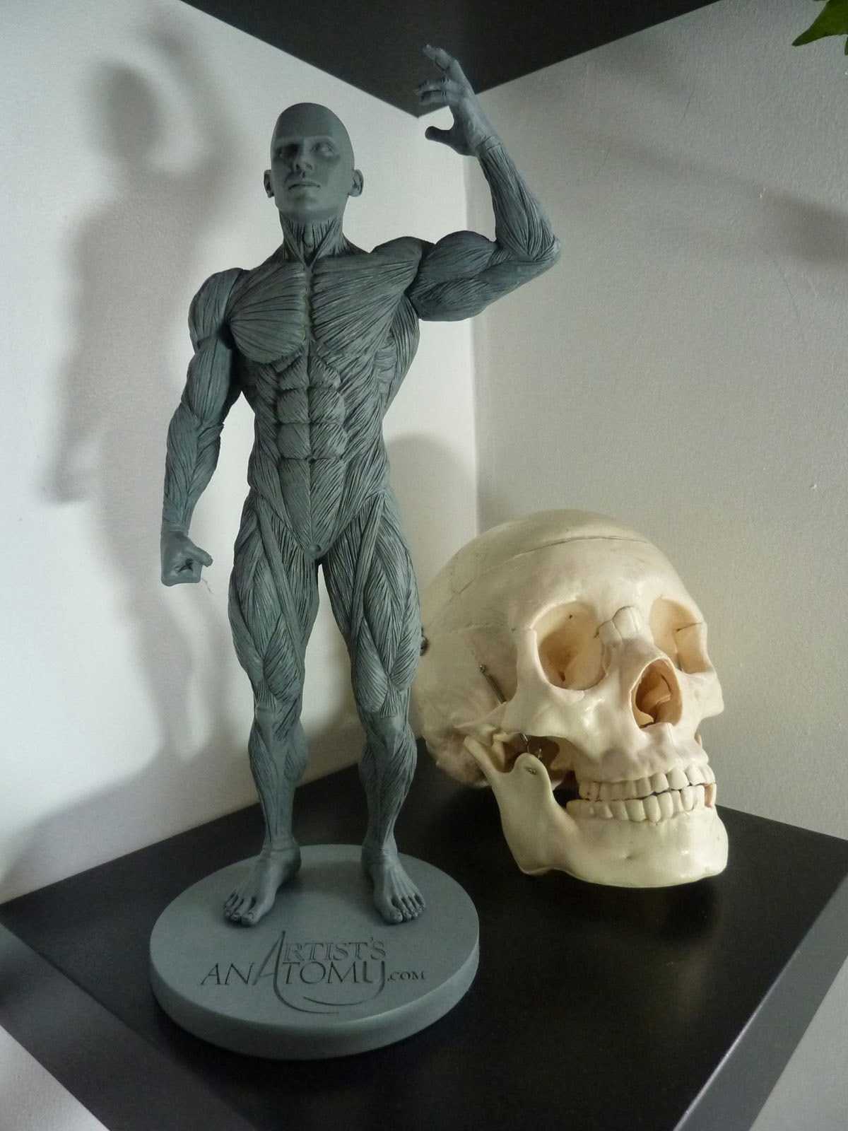LEIGH GALLAGHER Comic Book Artist: AWESOME ARTIST\'S ANATOMY MODEL!!!