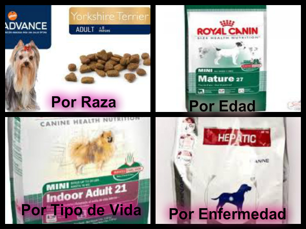 tipos de alimentos para perros: