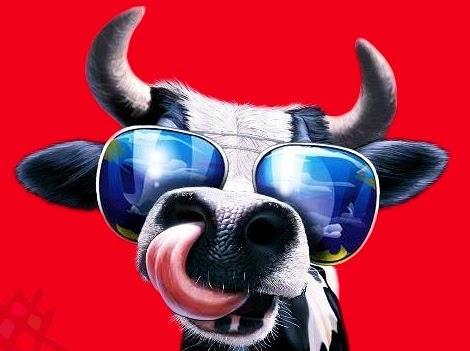 Funny eid al adha cow