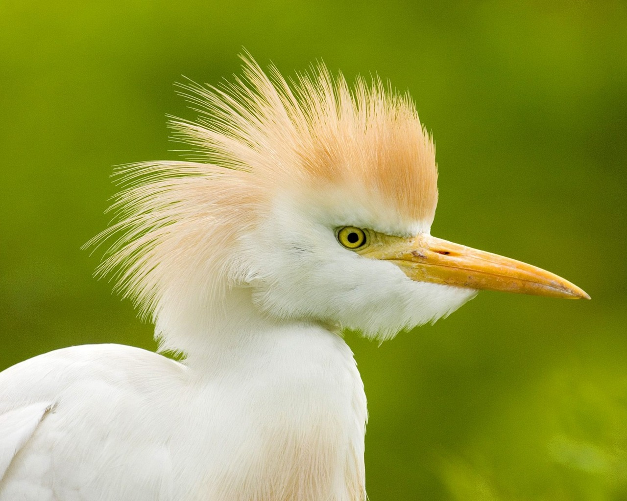 wnp wallpapers amp pictures beautiful birds wallpapers