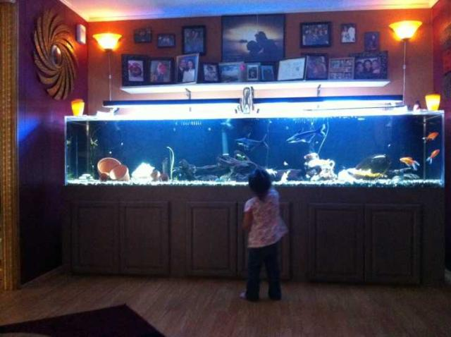 Giant aquariums january 2012 for 1000 gallon fish tank for sale