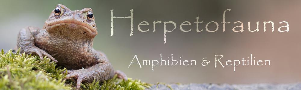 Herpetofauna