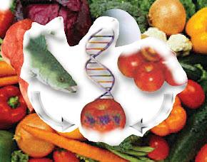 Alimentos Manipulados Geneticamente