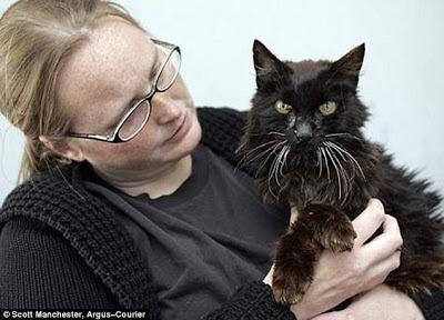 Setelah 13 tahun menghilang, kucing ini ditemukan kembali di sungai dalam kondisi sekarat