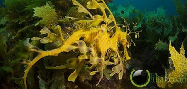 Naga Laut: Kamuflase