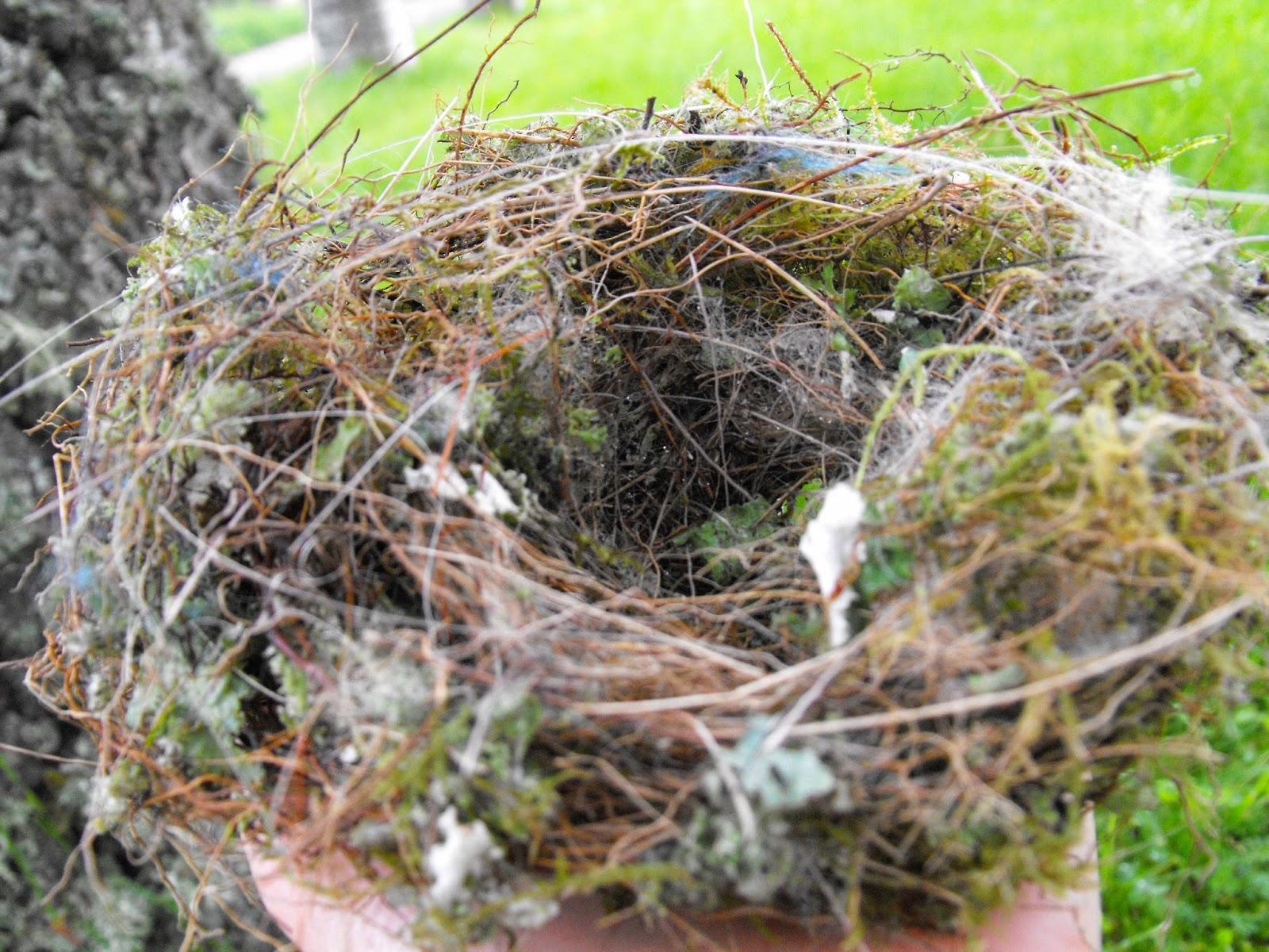 vackert fågelbo, Sösdala, fågelbo, Hässleholm, naturen, fåglar,