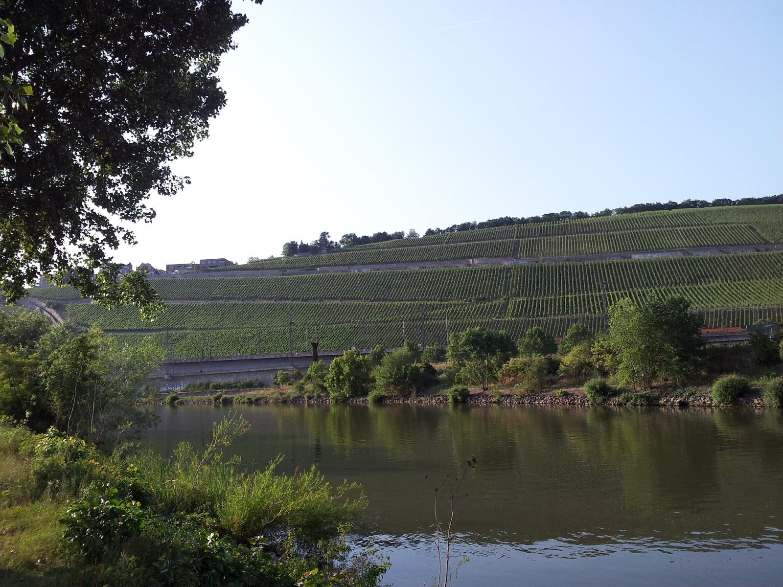 Weinberg Würzburg stone