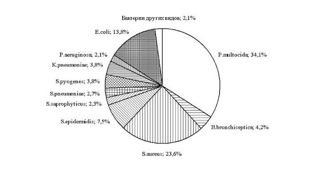 Бактериальные паразитоценозы  Pasteurella multocida