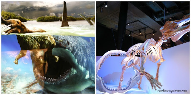 Houston Museum of Natural Science. Travel Writers' Guide: 50+ Best Science Museums Around the World