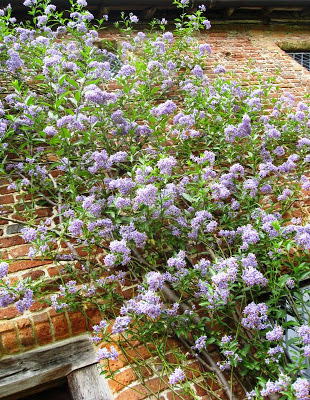 Purple flowers against a red brick wal