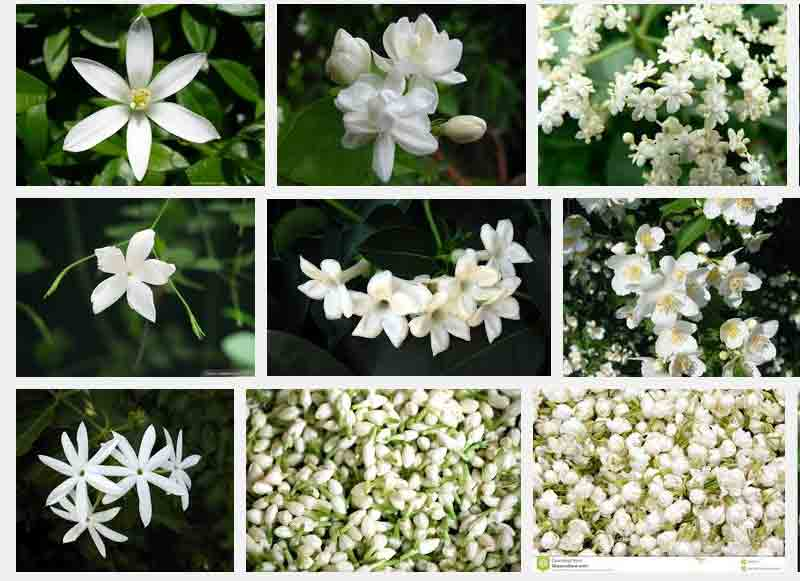 flowers and their meanings list  most famous, Natural flower