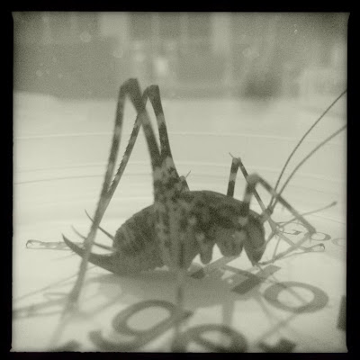 October cricket / rubs his thin legs together / keeping himself warm. // haiku - micropoetry - haikumages