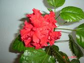 Una din florile mele