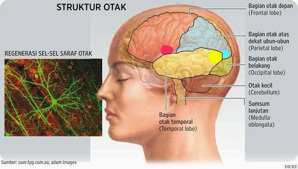 INILAH 5 Bagian Bagian Otak dan Fungsinya Untuk Tubuh Kita!