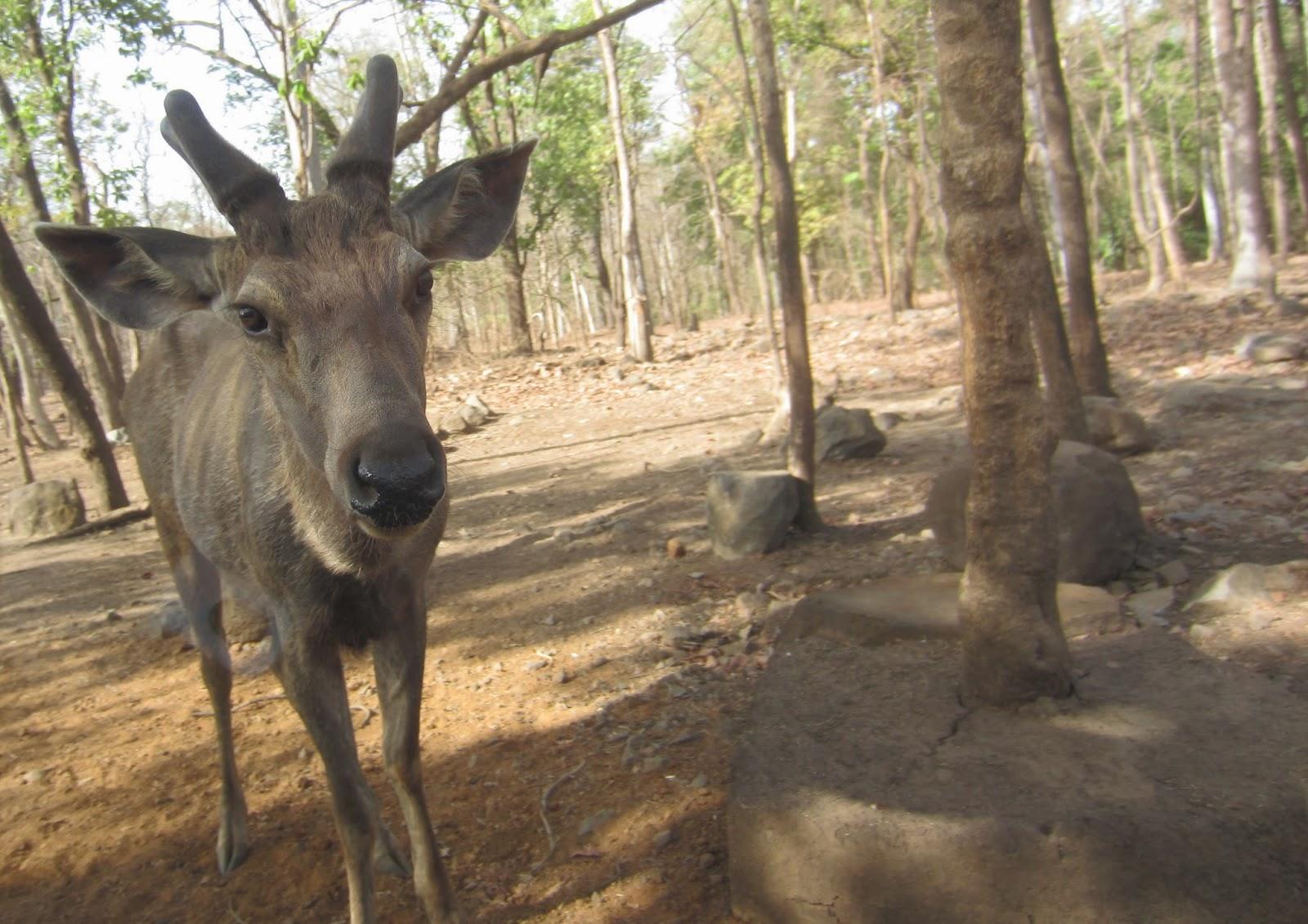 Silvassa, Dadra and Nagar Haveli, Weekend getaway Mumbai, Travel, Satmalia Deer Sanctury