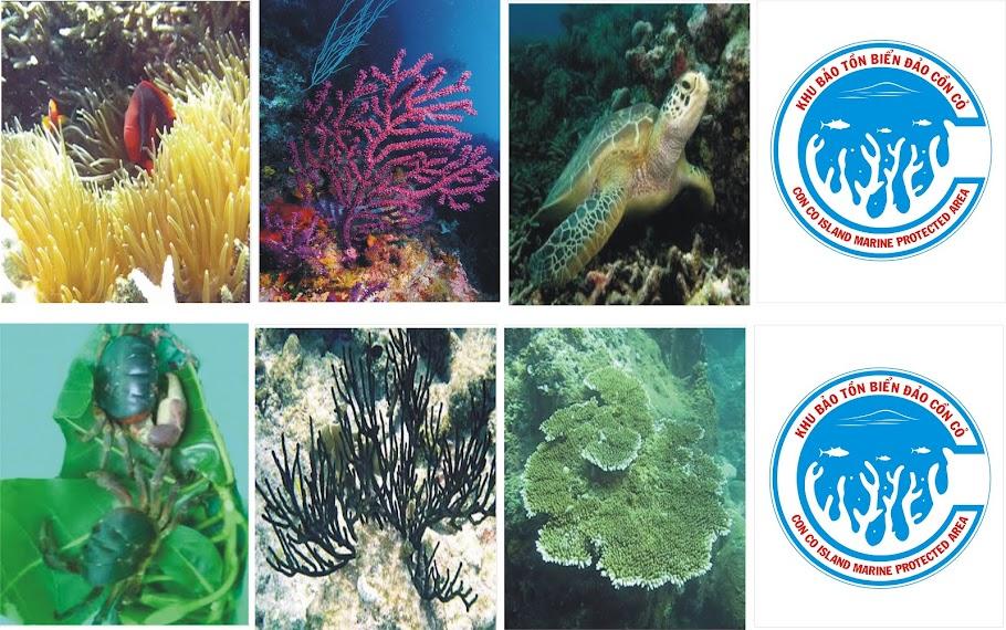 Khu bảo tồn biển đảo Cồn Cỏ