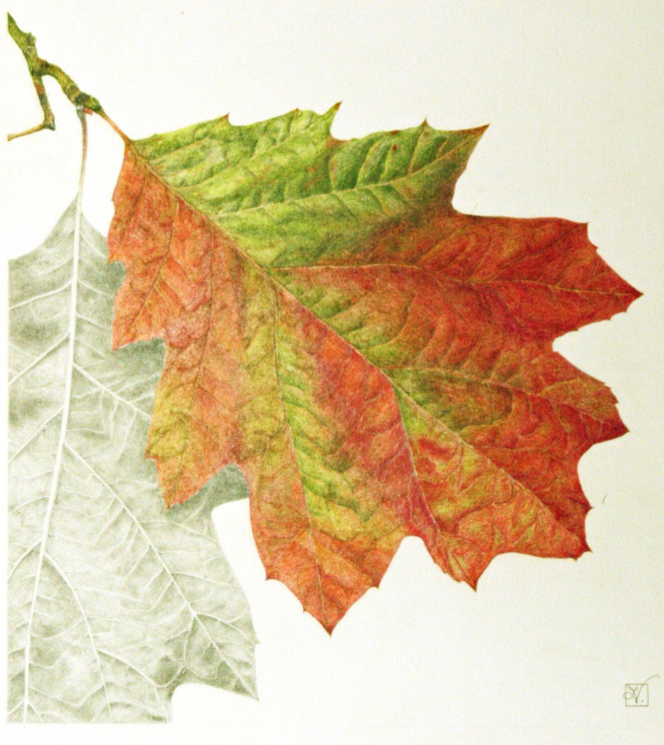 Art By Vreeke Colored Pencil Art