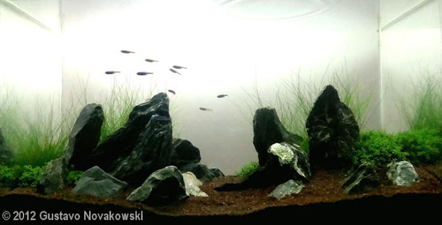 AGA - Gustavo Novakowski Aquatic Garden