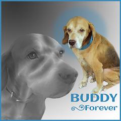 Buddy.