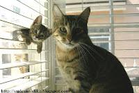 Luda macka mačka maćka zezancija zezancije