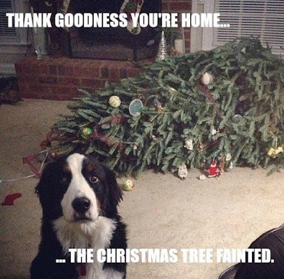 dog shaming, the christmas tree fainted, guilty dog