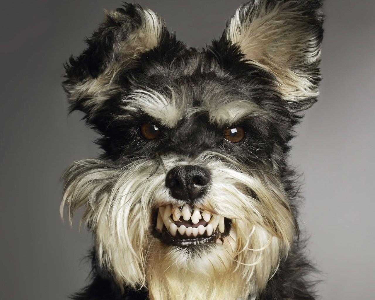 http://2.bp.blogspot.com/-pT3A5jwjLGo/UFpDfC_S-YI/AAAAAAAAGN4/tbBxubJRIxc/s1600/Free-High-Quality-Wallpaper-Of-Most-Dangerous-And-Ugly-Dog.jpg