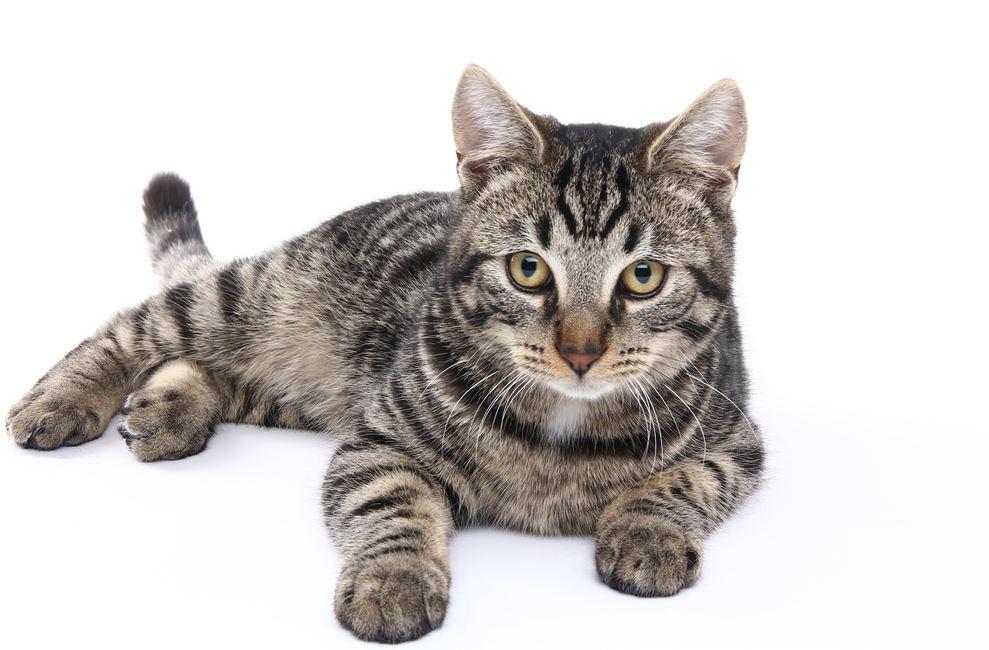 CAT - Crazy Talk