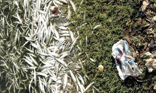 ... de peces preocupa a turistas y vecinos a orillas del lago San Roque