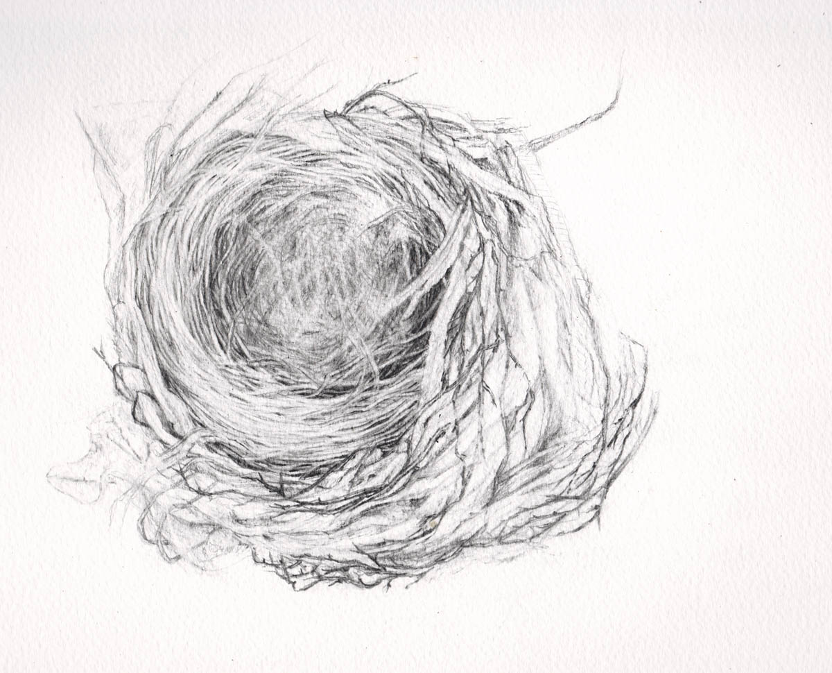Drawing printout how to draw a bird nest - Birds Nest In Tree Drawing Photo 24