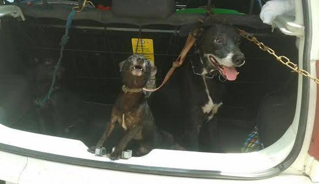 Animais foram encaminhados para atendimento veterinário e deverão ser disponibilizados para adoção