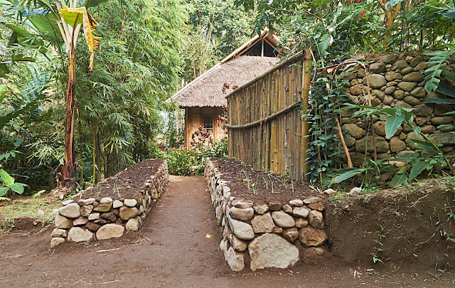 gardening,tropics,Philippines, year round food