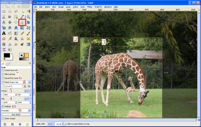 GIMP Crop Tool