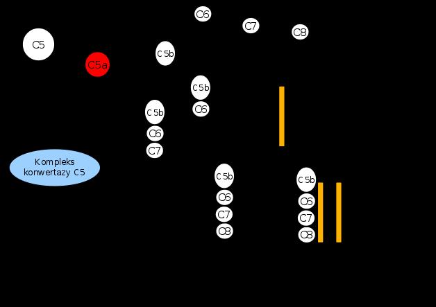 glikokortykosteroidy skutki uboczne