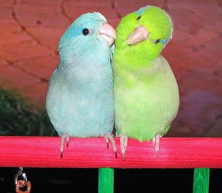 Exotic bird breeders in bangalore dating 6