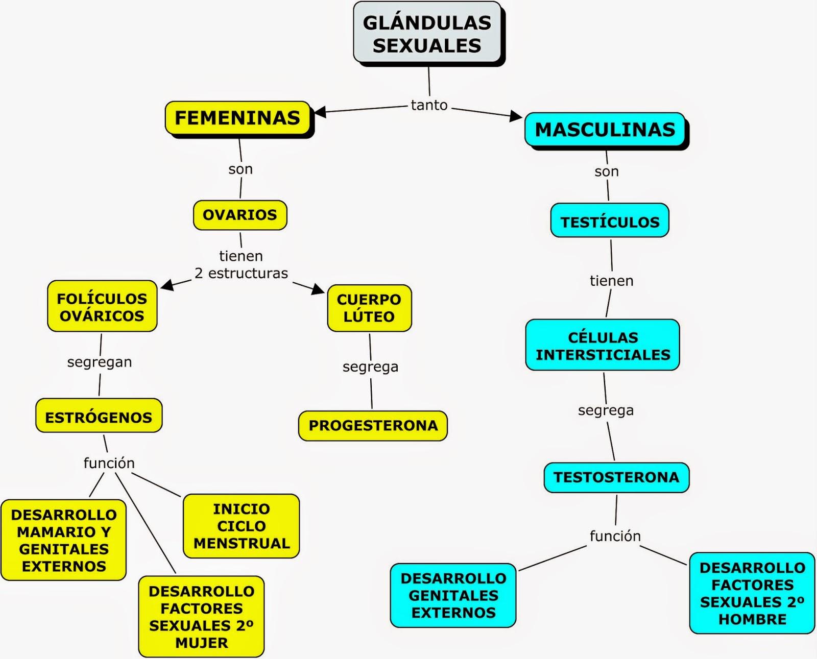Contemporáneo Diagrama Del Sistema Endocrino En Blanco Imagen ...