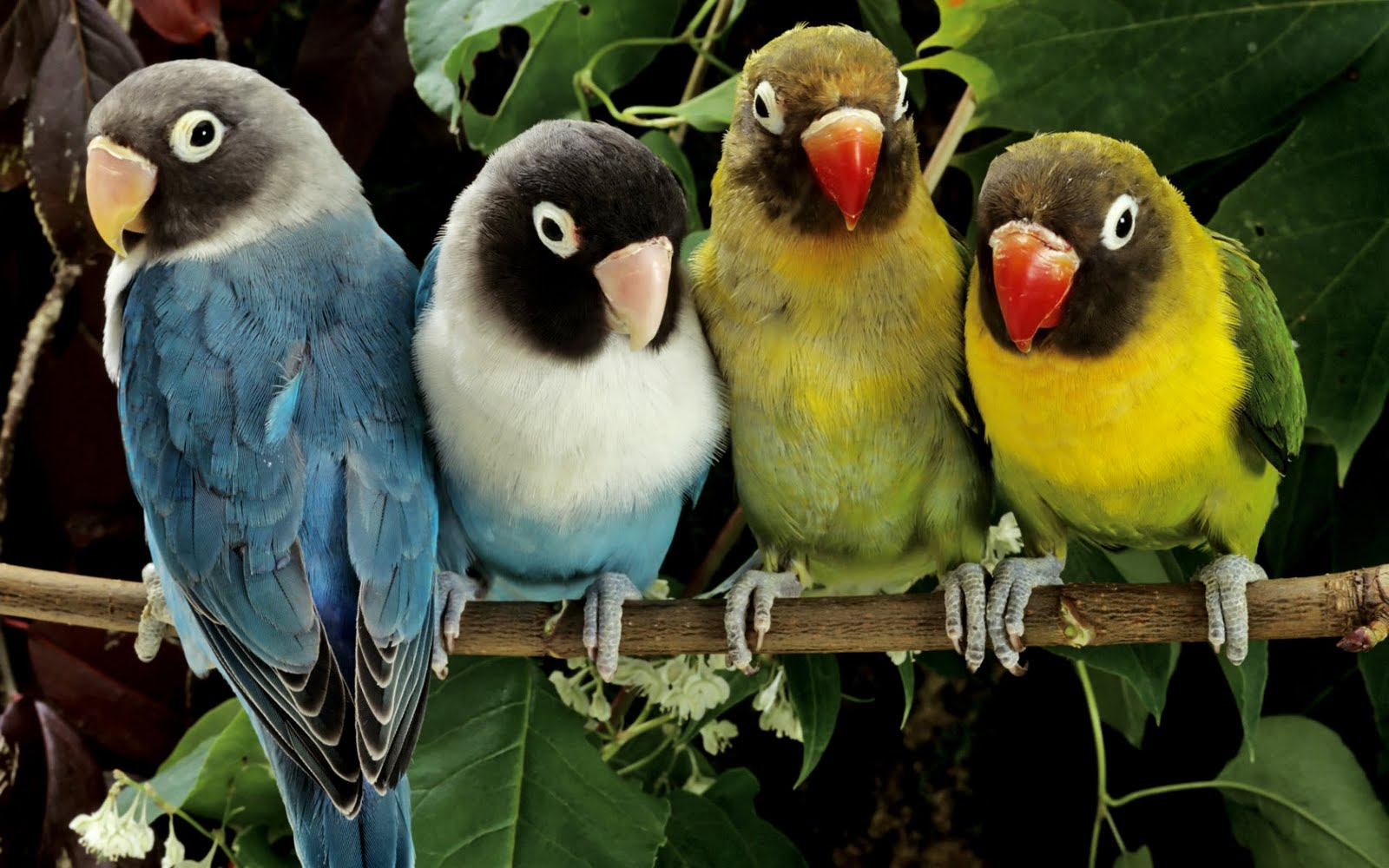 Beautiful Colorful Cute Birds Wallpapers (12)