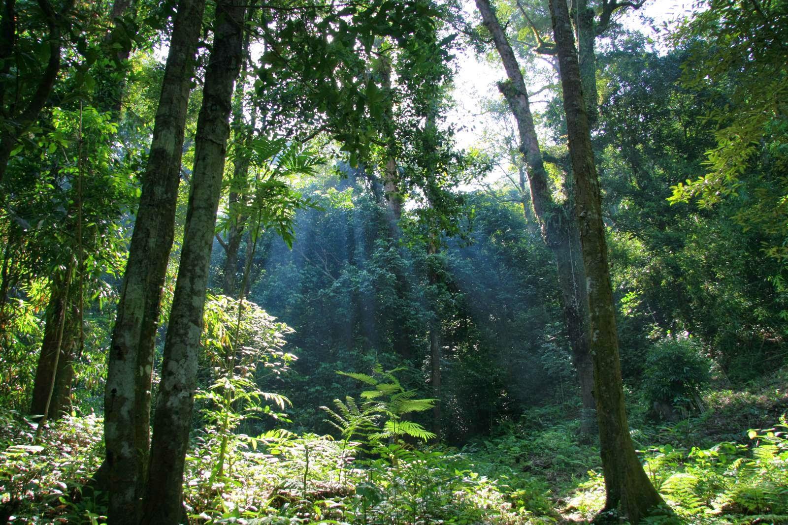 Zonasi Taman Nasional 67