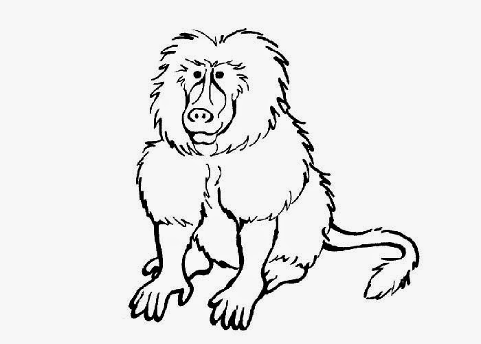 baboon animal coloring pages. Baboon coloring pages  Free Coloring Pages and Books for