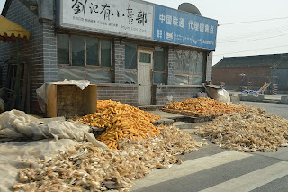 Corn drying in the sun in Beijing, China