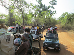 Tourist jeeps inside core tiger reserve