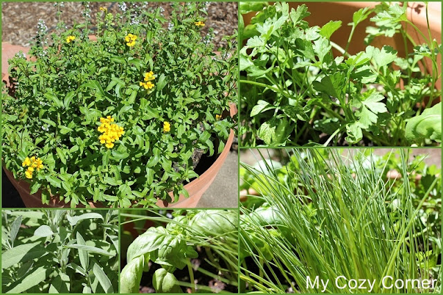 My Cozy Corner How To Plant An Easy Herb Garden