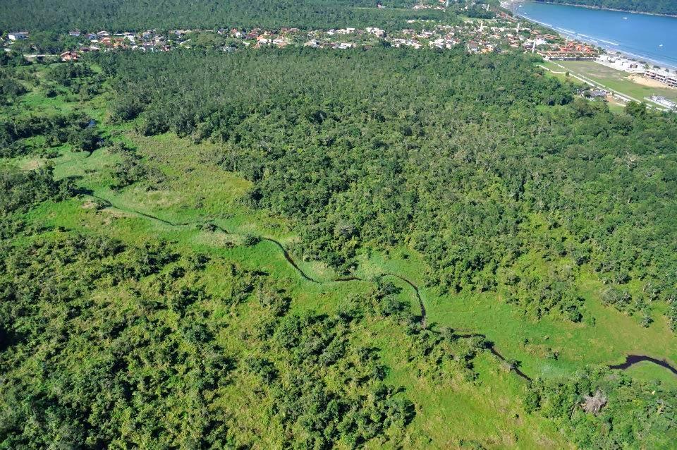 Vista dos fundos da Praia da Baleia, onde predomina a planície alagada revestida por Caxetal e Brejo de Restinga as margens do Rio Negro. Crédito: Leandro Saad