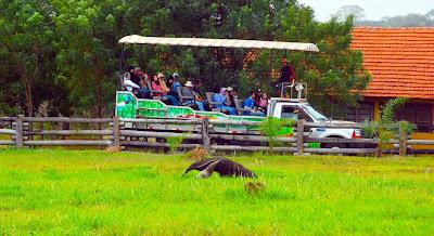 Safári Fotográfico no Pantanal